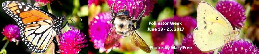 Pollinator Weekl
