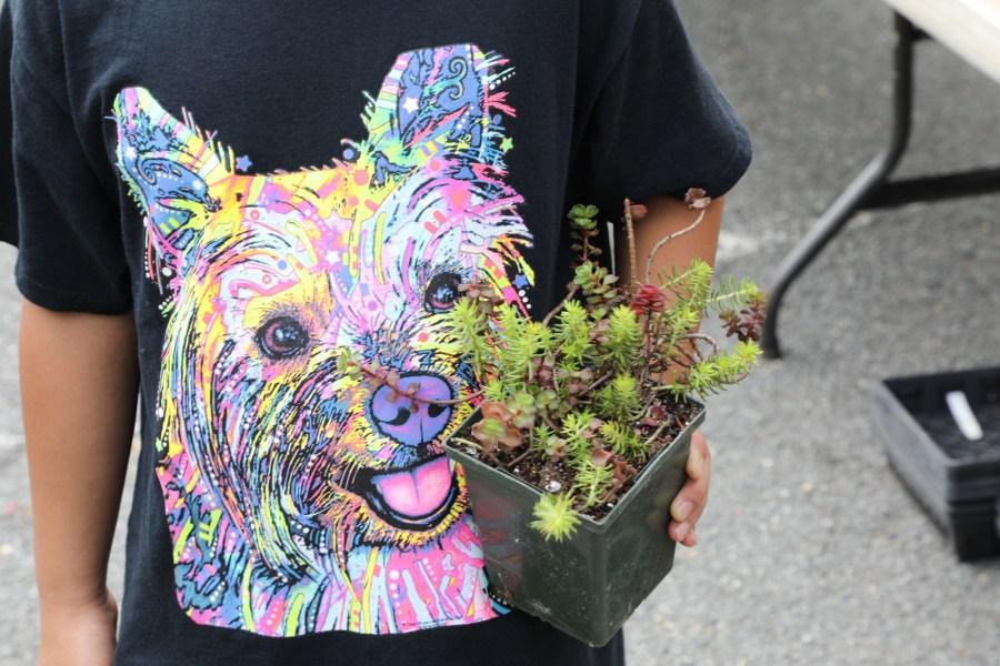 T-shirt and Sedum, Perfect match!