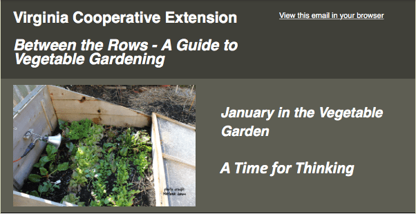 VCE Garden Guide - Between the Rows