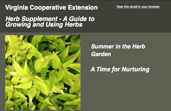 Summer_herb_supplement