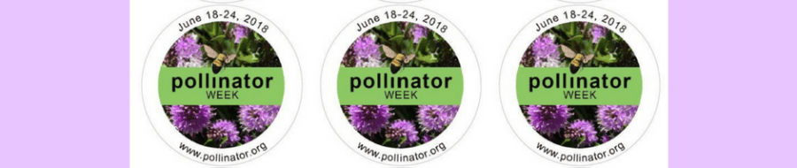 Pollinator Week 2018