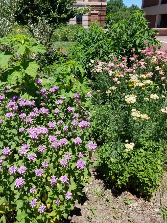 Urban Herb Gardens at Georgetown University Medical Center