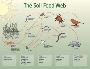 Soil Food Web Picture