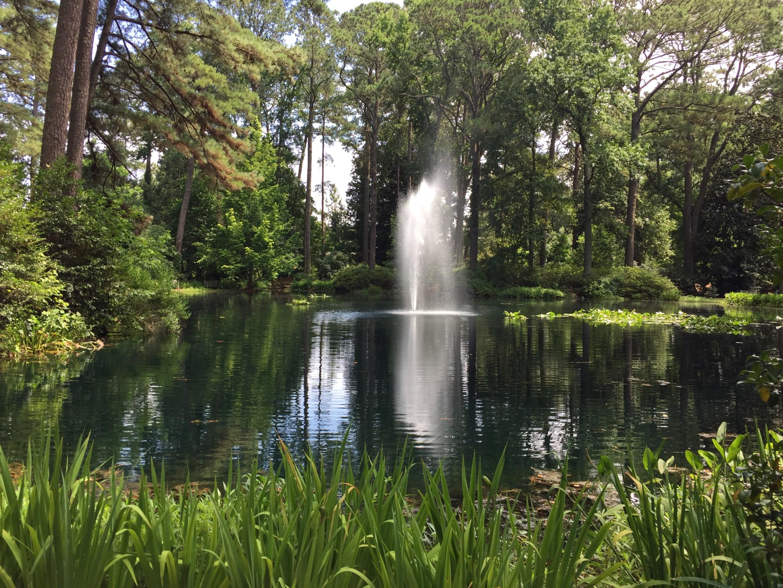 Friendship Pond bordering the Hofheimer Camellia Garden, home to 1,100 camellia species. Photo © 2018 Elaine Mills.