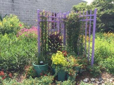 Colorful plants in the Hummingbird Garden. Photo © Elaine Mills.