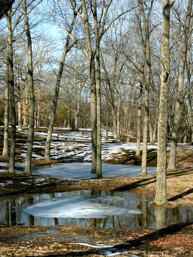 Light and shadows play off the barks of trees standing amidst pools of ice and melted snow at the Fort Shantok Archaeological District in Montville, Connecticut. © Mary Free