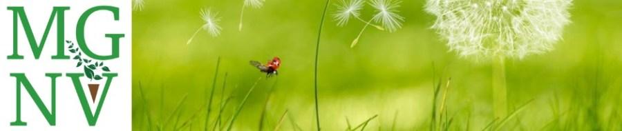ady beetle