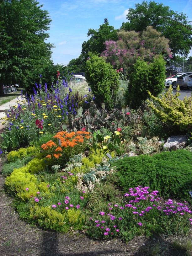 Waterwise Garden at Simpson Gardens in Alexandria in July. Photo © 2015 Christa Watters