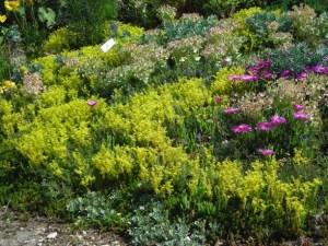 Waterwise Garden at Simpson Gardens in Alexandria. Photo © Christa Watters