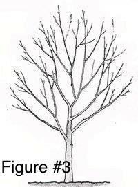 Profile of healthy tree