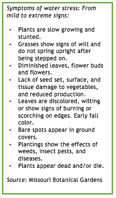 Symptoms of water stress: From mild to extreme signs: • Plants are slow growing and stunted. • Grasses show signs of wilt and do not spring upright after being stepped on. • Diminished leaves, flower buds and flowers. • Lack of seed set, surface, and tissue damage to vegetables, and reduced production. • Leaves are discolored, wilting or show signs of burning or scorching on edges. Early fall color. • Bare spots appear in ground covers. • Plantings show the effects of weeds, insect pests, and diseases. • Plants appear dead and/or die. Source: Missouri Botanical Gardens