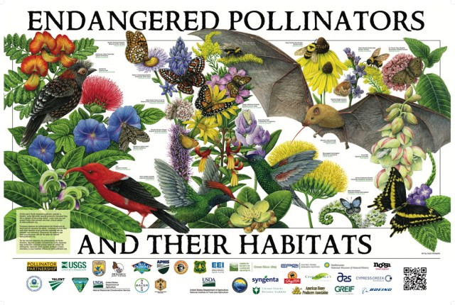Endangered pollinators and their habitats