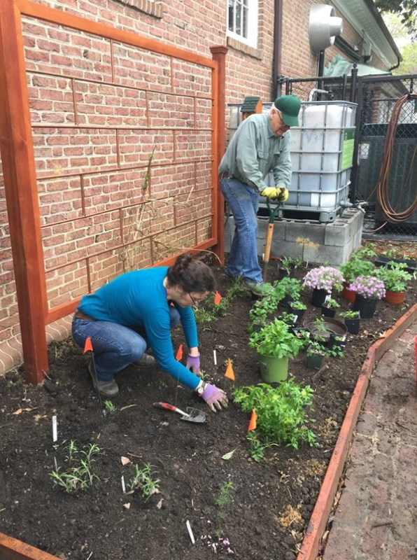 Planting while leaving flags to mark where a few additional specimens will go. Elaine L. Mills, 2019-04-14.