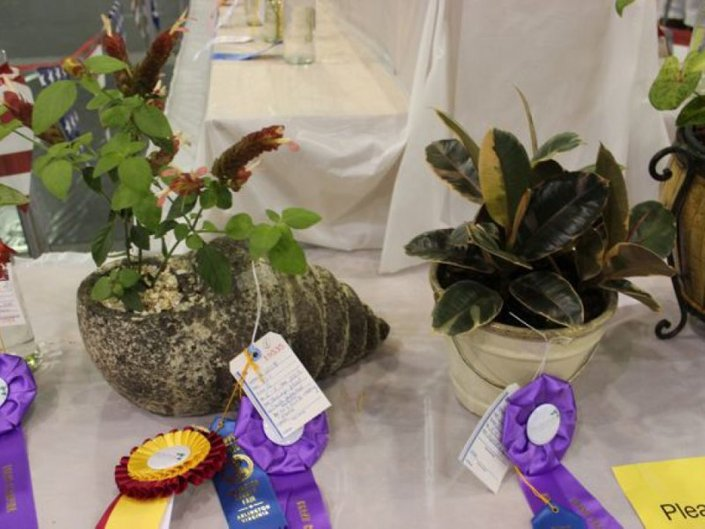 Prize winning houseplants