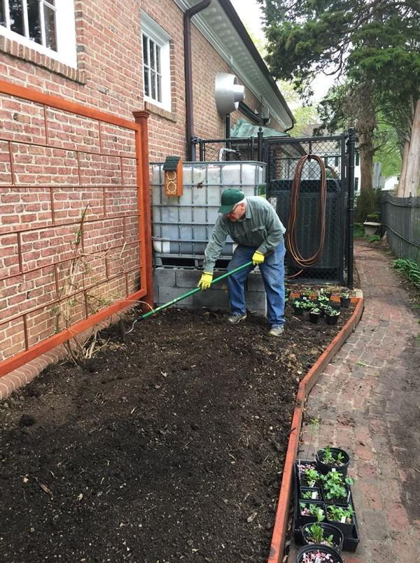 Shrive rakes the soil smooth.