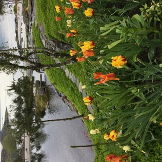 Flor og Fjære, Sør-Hidle, Stavanger, Norway Photo © 2019 Nancy Smith Brooks