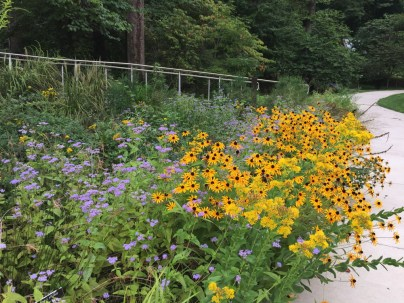 The hillside meadow features ecologically conscious plantings of numerous native perennials.