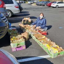 Rhonda Collier distributes seeds from a parking lot in early April. Photo © Kirsten Conrad
