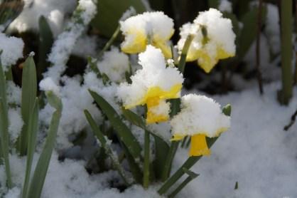 False Spring Photo from Pixabay