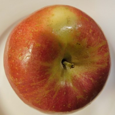 The lenticels (light-colored flecks and starbursts) on a Fuji apple. Photo © Christa Watters
