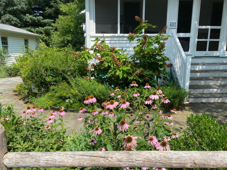 Home with purple cone flowers, oak leaf hydrangeas and wooden fence.