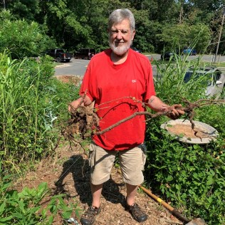 Nick Nichols wins the prize for longest root pulled—a nasty porcelain berry vine.