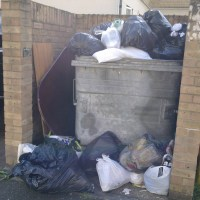 Rodents love our bins