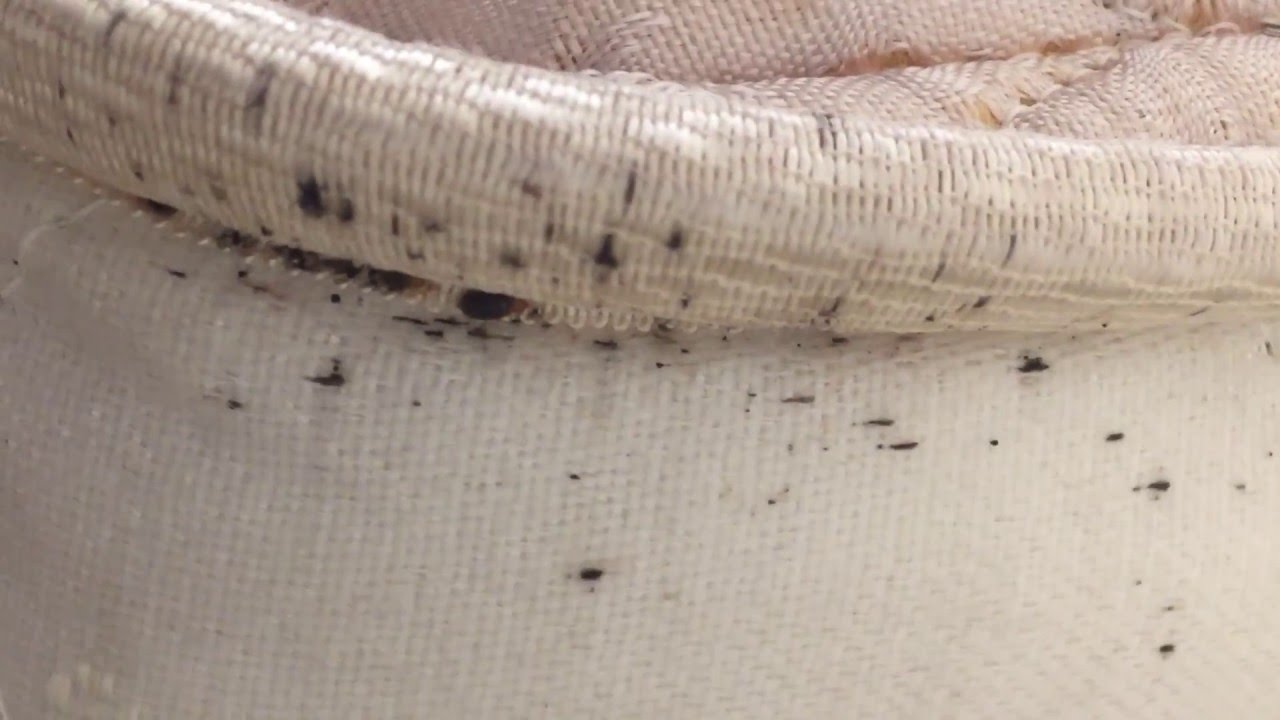 Bed Bug Bites Could Be From Secondhand Furniture So Buy New