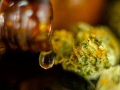 Illinois Girl Medical Marijuana School