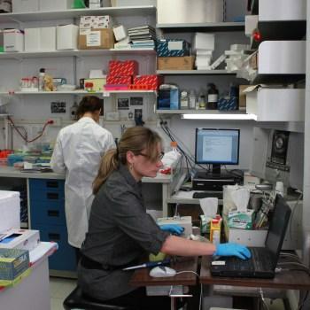 Corina Nagy (PhD student)