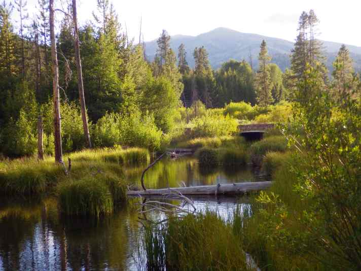 Looking upstream on the beaver pond.
