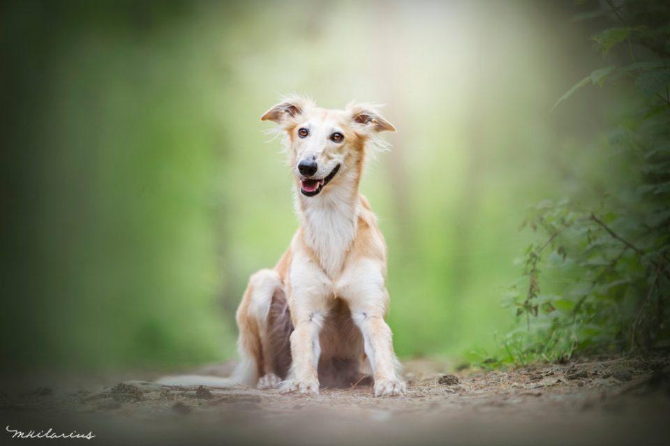 Onscherpe achtergrond hond