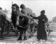 Harriet Chalmers Adams in the Gobi Desert