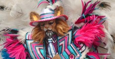 Philadelphia Celebrates The New Year With Annual Mummers Day Parade