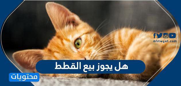 هل يجوز بيع القطط ما حكم بيع القطط في الاسلام موقع محتويات