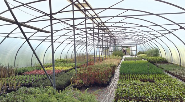 NetDespatch and Zenstores weed out inefficiencies for Martin's Nursery