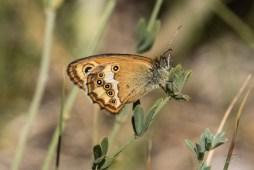 juillet2017-papillons