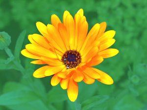 8 plantas medicinales para el cuidado de la piel