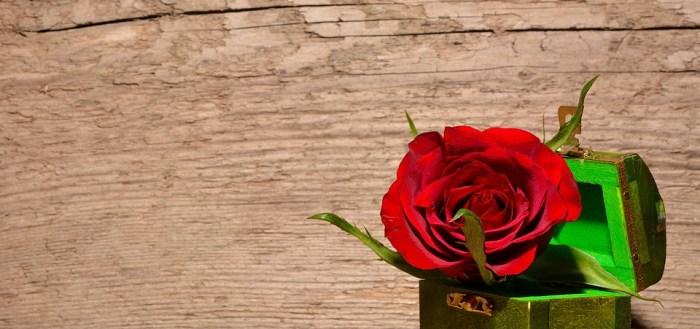 red rose vidya sury