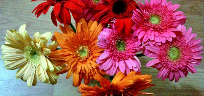 vidya sury bouquet