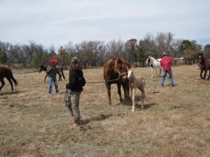 The horses charged into see the baby