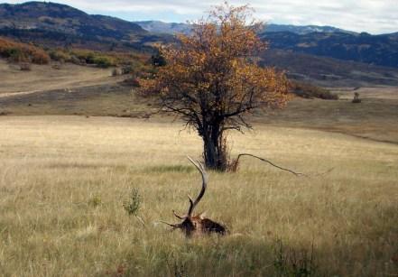 New Mexico Bull Elk Hunt