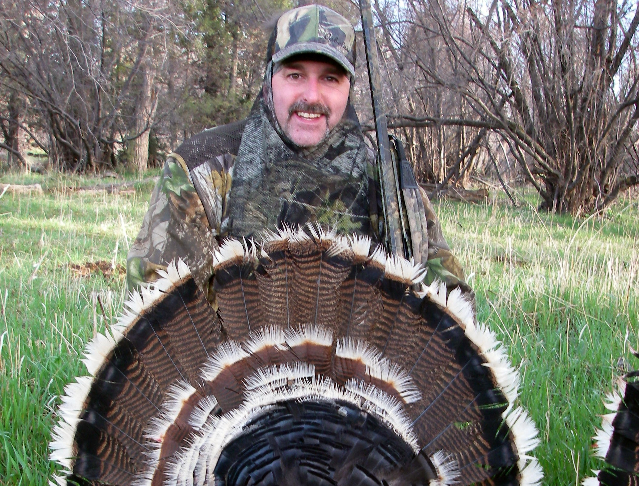 Colorado Merriam Turkey