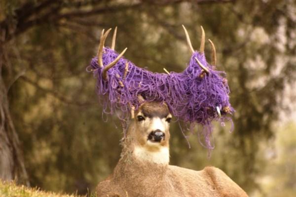 mule-deer-buck-hammock-tangled-antlers-cpw-73bdcef4-f52a-4e26-8417-9cf0e26883fa
