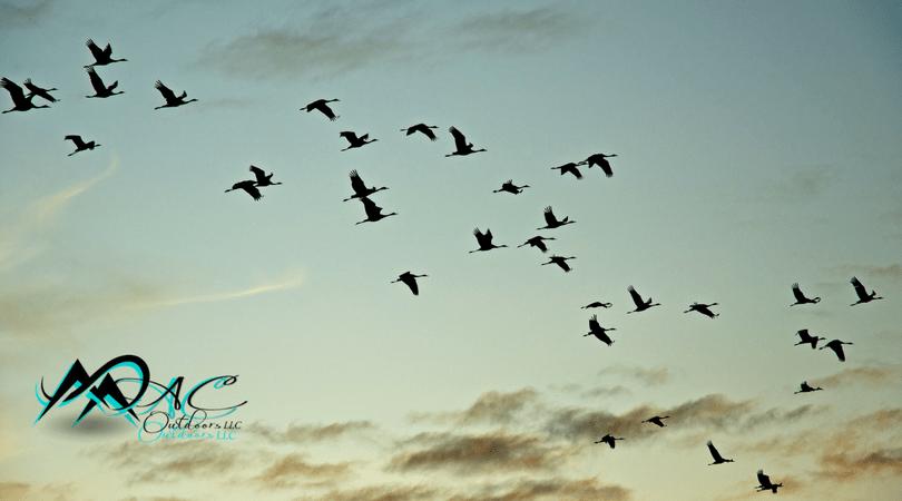 Migratory-Birds-MAC-Outdoors-Mias-Motivations