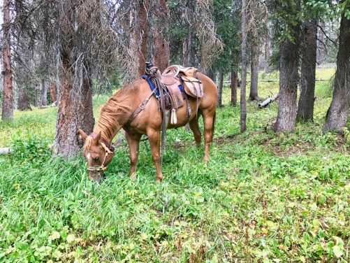 Cowboy-the-horse-picnicing-in-the-mountains-Mia-Anstine-photo