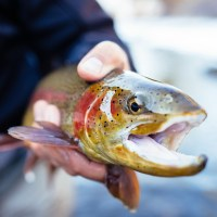 Keep All the Fish You Catch at Southern Colorado Reservoir