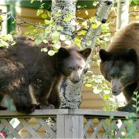 A Wildlife Reminder: Time to be Bear Aware