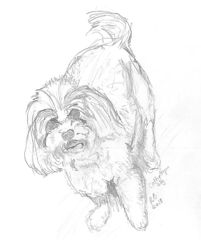 Co Works dog I drew at work, fluffy white dog in pencil