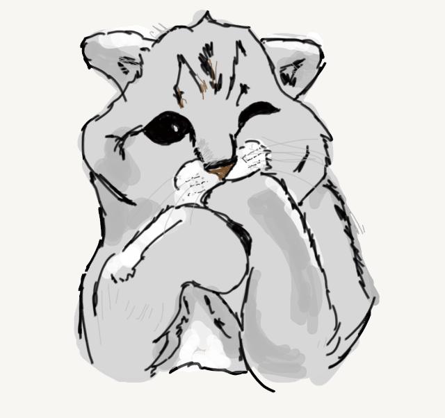 Grey Cat Sucking his left paw